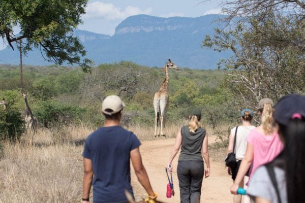research-wildlife-conservation-volunteer-african-impact-south-africa 1