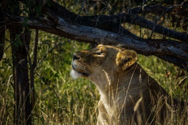 research-wildlife-conservation-volunteer-african-impact-south-africa 15